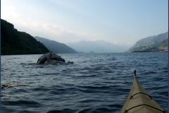 sul lago di Lecco 8